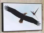 Soaring Bald Eagle Art Designer Wall Clock - GGW5476