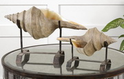 Conch Shell Sculpture  - LUT8066
