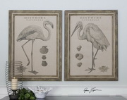 Natural History Framed Art  - LUT7501