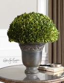Globe Preserved Boxwood  - LUT8279