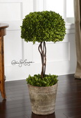 Tree Topiary Preserved Boxwood  - LUT8282