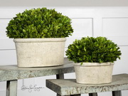 Oval Domes Preserved Boxwood  - LUT8285