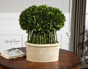 Willow Topiary Preserved Boxwood  - LUT8286