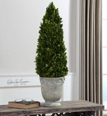 Boxwood Cone Topiary  - LUT8289