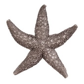 Howard Elliott Deep Pewter Starfish - Small  - MHE6624